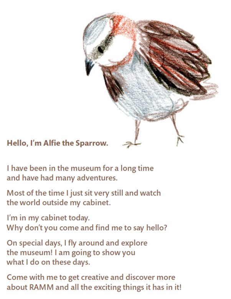 RAMM Alfie the Sparrow