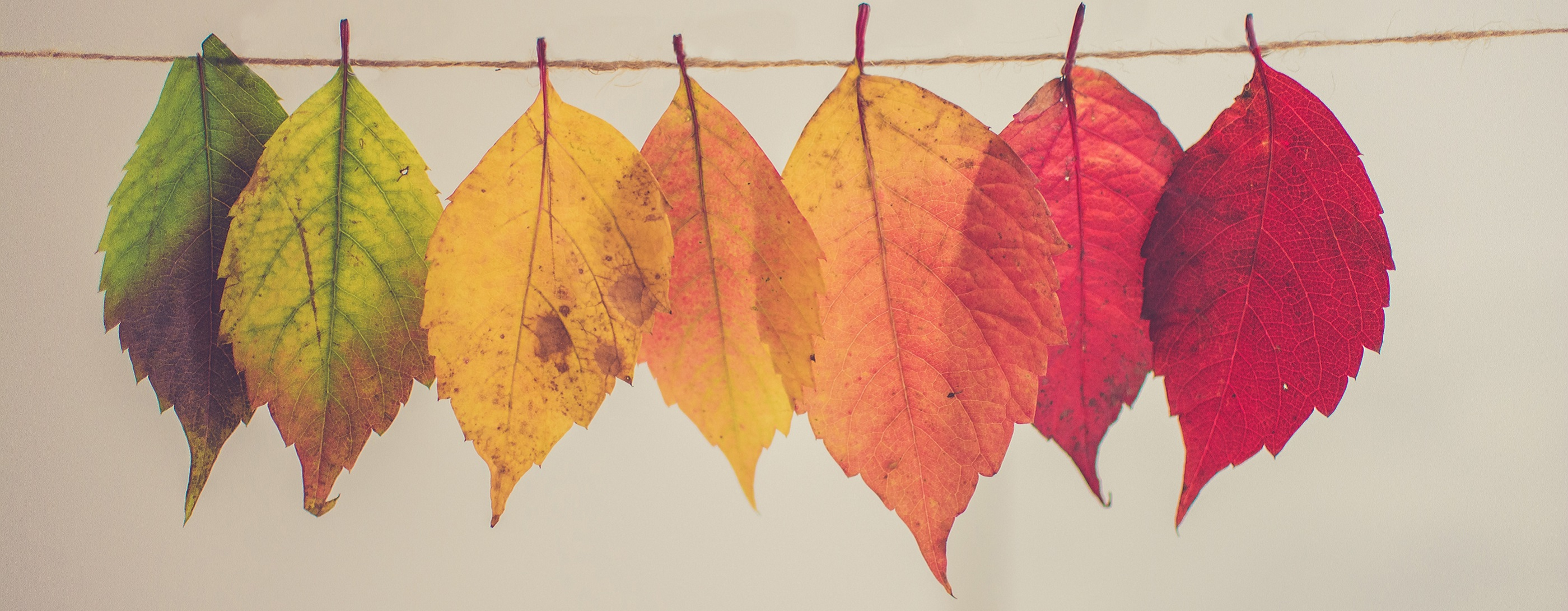 7 arts activities to get you out and about this autumn